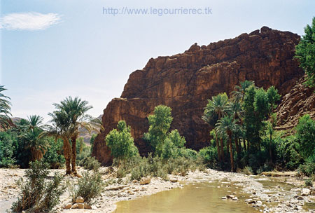 todra gorges palm trees