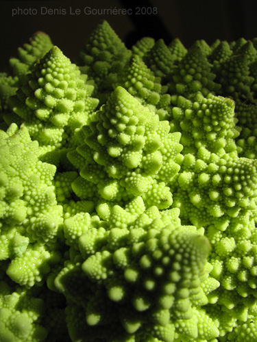 romanesco close-up